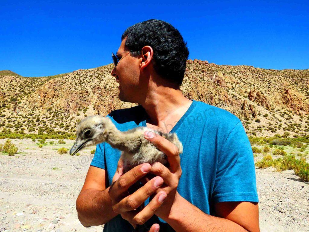 Turismo animal exploratório no altiplano boliviano