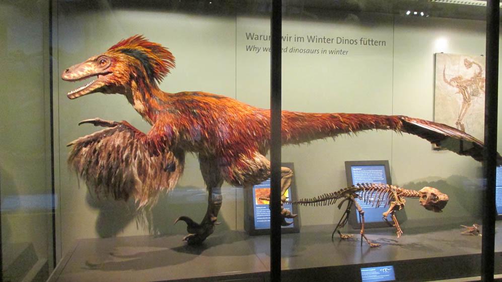 Museu de História Natural de Viena - Dino bird