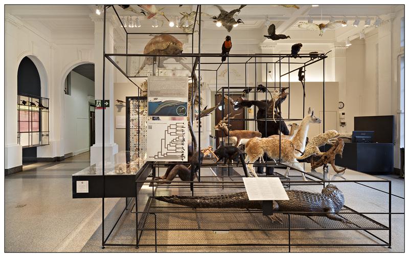 Museu de História Natural de São Paulo